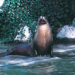 Seal - Mersin
