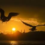 Turkey, Istanbul, Haliç